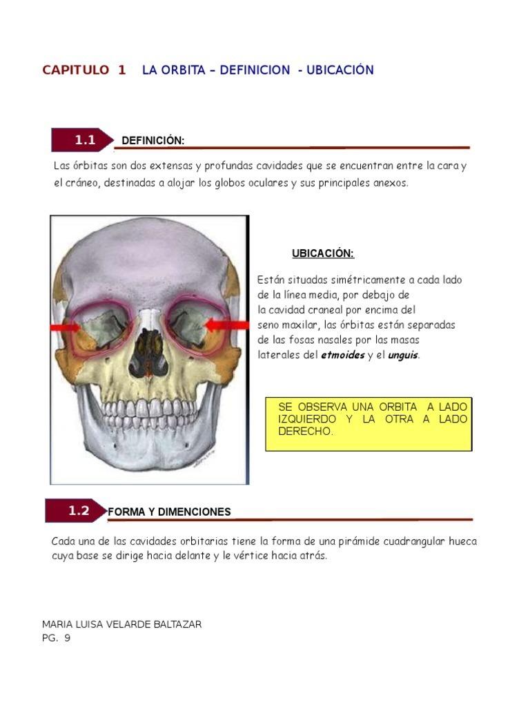 Huesos de La Órbita Ocular