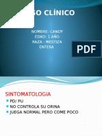 Caso Clinico Analisis de Orina - veterinaria