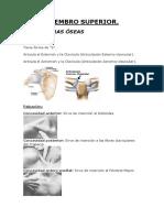 2º Osteopatia Palpatoria Miembro Superior -Glory