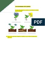 Identificar Las Necesidades de Las Plantas