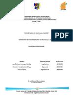 Diagnostico Multiprofesional Sacapulas 2010.- (en PROCESO)