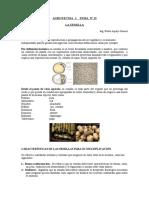 Agrotecnia i Tema Nº 12