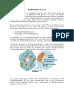 RESPIRACIÓN.docx