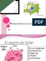 ORAGNELOS CELULARES