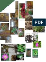 Praktikum 5 Caryophyllales Proteales