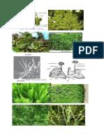 gambar tumbuhan lumut