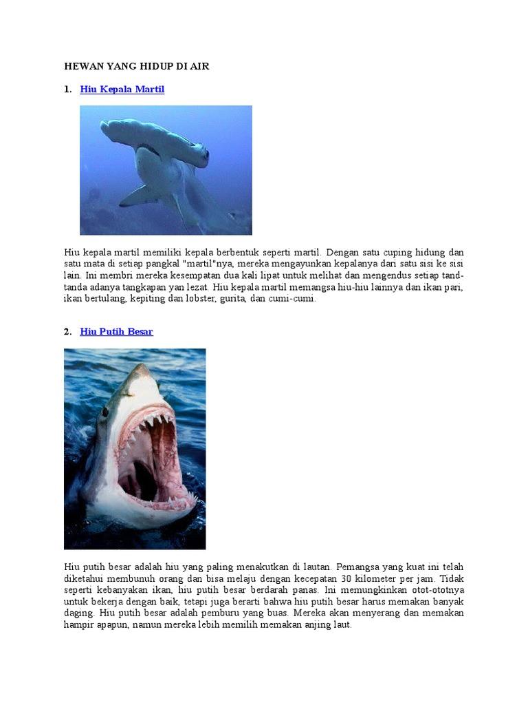 640 Koleksi Gambar Hewan Yang Hidup Di Air Dan Penjelasannya Terbaik