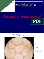 FicatPancreas