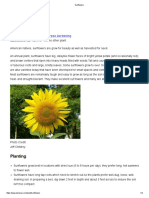 Sunflowers_ How to Plant, Grow, And Care for Sunflower Plants _ the Old Farmer's Almanac