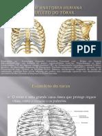 Aula em anatomia humana-torax.pdf
