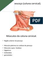 Miologia do pescoço.pdf