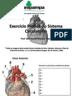 Exercício Prático Circulatório Anatomia