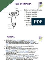 2.c) Histologi Sistem Urinaria
