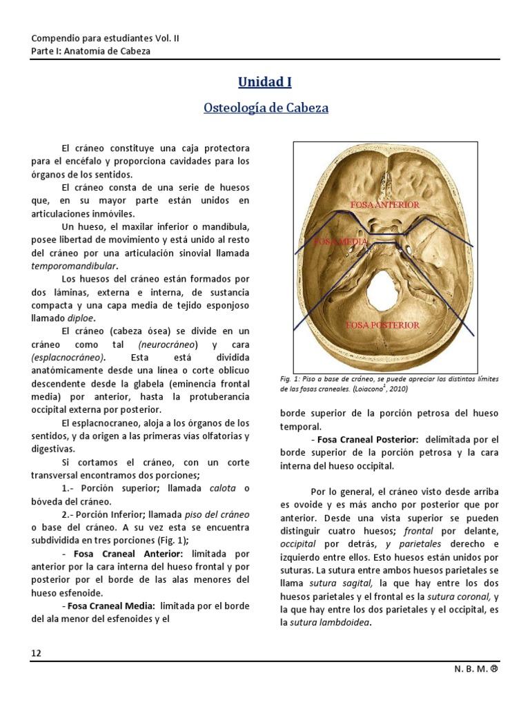 Excepcional Petrosa Anatomía Hueso Temporal Foto - Imágenes de ...