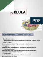 Célula eucariota y procarita