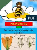 polinización (1)