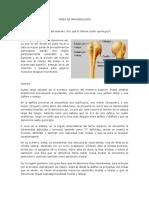 Anatomía Clínica Del Húmero