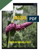 6. Araceae