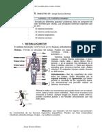 APUNTES+EDUCACIÓN+FÍSICA.pdf