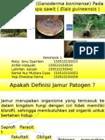Jamur Patogen Pada Tanaman