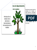Microsoft Word - Estructura de La Madera _hor