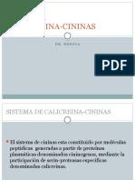 Sistema Calicreina Cininas