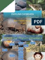 6._phyllum_vertebrata_mamiferos.ppt