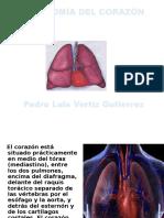 Anatomia Del Corazon Clase 1