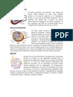 Celula Procariota, Eucariata, Meiosis, Mitosis, Interfase, Fase M, Profase, Metafase, Anafase, Telofase,