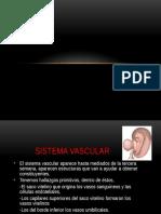 Circulacion Fetalff