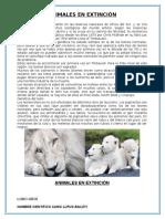 Animales en Extinción - Leon Blanco