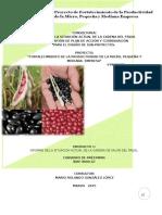Gt8000 Analisis Situacion Actual Cadena de Frijol v050315