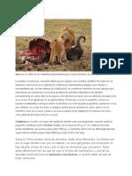 Los Animales Peligrosos Del Mundo211212212122