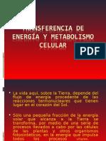 Tema 5 Transferencia de Energía y Metabolismo Celular