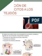 003Exposición Migracion de Leucocitos 31