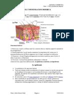 Clase 2 Piel y Penetracion Dermica