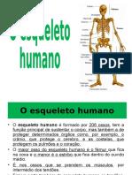 o Esqueleto Humano Alunos