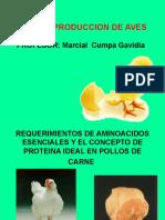 Clase Alimentacion en Pollos de Carne