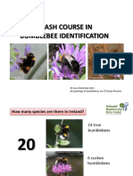 crash-course-in-bumblebee-identification 2015
