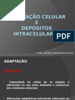 Adaptação celular.pptx