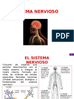 Sistema nervioso del cuerpo humano.