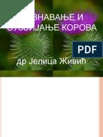 Copy of Korovi Predavanje 1.