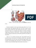 Anatomi Dan Fisiologi Duodenum