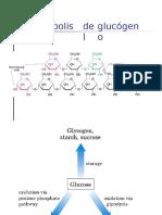 Sintesis y Degradacion Del Glucogeno