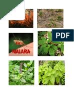 malaria pics