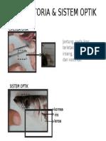Circulatoria & Sistem Optik Alu-Alu