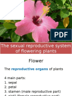 The Sexual Reproductive System of Flowering Plants