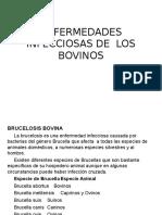 2 Enfermedades Infecciosas de Los Bovinos