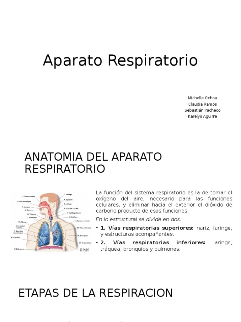 Aparato-Respiratorio (anatomia)