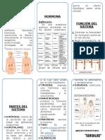 Triptico Sistema Endocrino